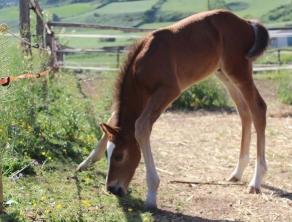 I cavalli di Boscovivo